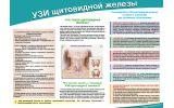 Санбюллетень УЗИ щитовидной железы
