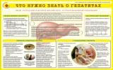 Санбюллетень Что нужно знать о гепатитах